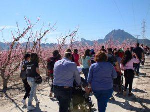 Floración Cieza Turistas